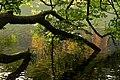 Reflections - panoramio (4).jpg