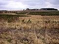 Reforestation Near Drumbow - geograph.org.uk - 146231.jpg