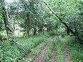 Restricted byway, Stockton Wood, near Stockton - geograph.org.uk - 503382.jpg