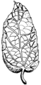 Reticulate - Leaf (PSF).png