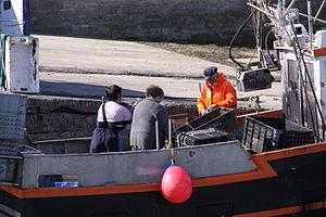 Retour de la pêche à la seiche du fileyeur Jason IV (45).JPG