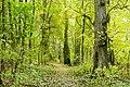 Rezerwat przyrody Morysin, park 3.jpg