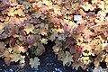 Rhododendronpark Bremen 20090513 163.JPG