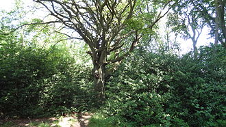 Riddlesdown Common - Coombes Wood in the northern corner of the site