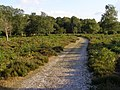 Ridley Wood, New Forest - geograph.org.uk - 214043.jpg