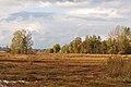 Robenhauser Riet 2010-10-20 17-23-08.JPG