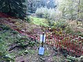 Roman period native settlement in Poolscar Wood.jpg