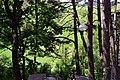 Romashkivka Kivertsivskyi Volynska-Tsumanski sources natural monument-view view from the stairs-1.jpg