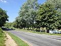 Rookley Highwood Lane 6.JPG