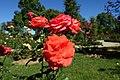 Rose garden @ Parc de Bagatelle @ Paris (27765652914).jpg