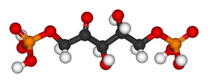 Ribulose 1,5-bisphosphate - Image: Ru BP 3D balls