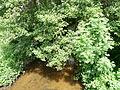 Ruisseau d'Ozange Saint-Exupéry-les-Roches D45 amont.JPG
