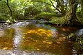 Ruisseau des Gorges du Corong.JPG