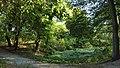 Rumianek - Park (3) - (Q33092699).jpg