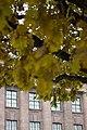 Rustling leaves.jpg