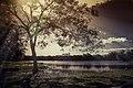 Sólo Un árbol Nada Más (261993767).jpeg