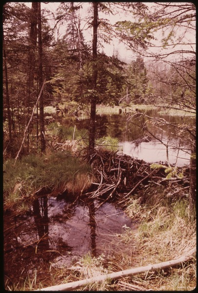 Beaver Dam (WI) United States  city pictures gallery : SMALL BEAVER DAM IN THE ADIRONDACK FOREST PRESERVE NARA ...