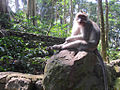 Sacred Monkey Forest Sanctuary (6336846727).jpg