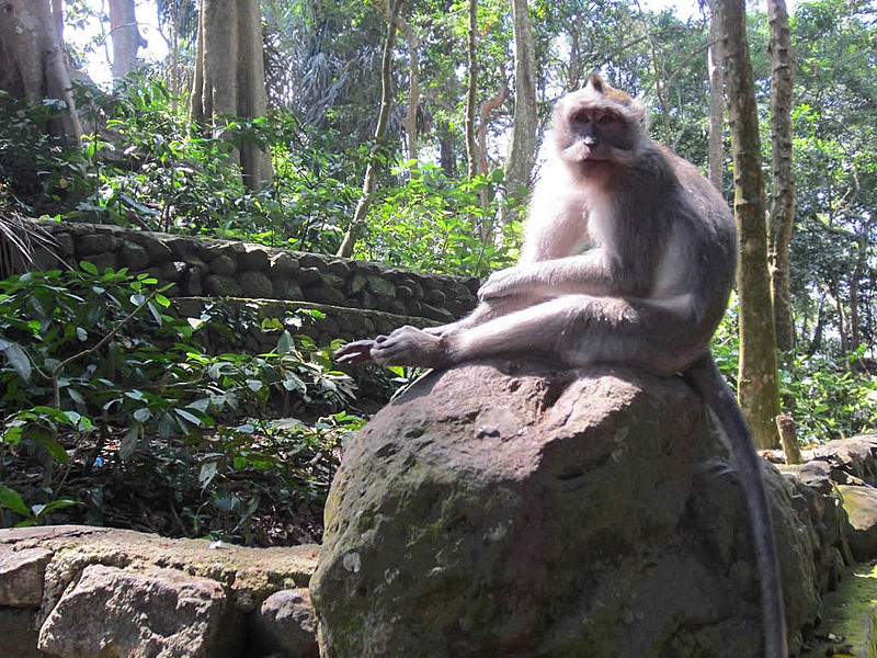 The Sacred Monkey Forest Sanctuary in Bali – Experience Nature!
