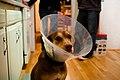 Sad Puppy in Kitchen.jpg