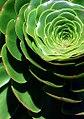 "San Francisco - Golden Gate Park Conservatory Of Flowers ""Expansion"" (386176203).jpg"