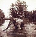 Sankt-Peterburg oldfoto 13690.jpg