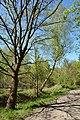 Schleswig-Holstein, Fockbek, Naturschutzgebiet Fockbeker Moor NIK 1627.jpg