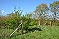 Schleswig-Holstein, Lohbarbek, Naturwald NIK 1443.jpg