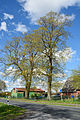 Schleswig-Holstein, Lutzhorn, Naturdenkmal 49-03 NIK 2918.JPG
