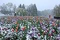 Schneefall ..IMG 5878WI.jpg