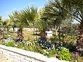 Scicli (Sicilia) 2010 062.jpg