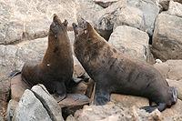 Seal 0906.jpg