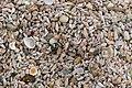 Seashells on Marsaxlokk beach 01.jpg