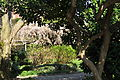 Seattle - Parsons Gardens 28.jpg
