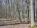 Seen-Tour im Kraichgau-Stromberg - panoramio.jpg