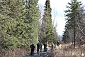 Selecting the 2015 Capitol Christmas Tree (22530103492).jpg