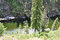 Selway River from trail.jpg