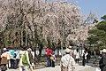 Semboin subtemple in Daigoji (3471811467).jpg