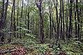Seney National Wildlife Refuge (15274340870).jpg