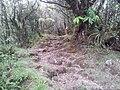 Sentier du cap Anglais - panoramio.jpg