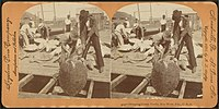Shipping green turtle, Key West, Fla, from Robert N. Dennis collection of stereoscopic views 4.jpg