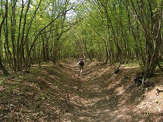 Shumen Plateau Nature Park - Shumen Plateau forest near Shumen