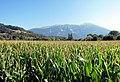 Slovenia - Gole di Vintgar (11732379936).jpg