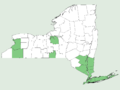 Smilax rotundifolia NY-dist-map.png