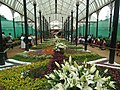 Snap from Lalbagh Flower Show Aug 2013 8362.JPG
