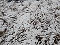 Snow in Kakani 20190228 111257.jpg