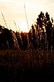 Sonnenuntergang (9336067011).jpg