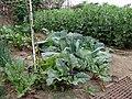 South Central Farm 54.jpg
