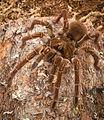 Spider13.jpg