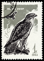 Stamp CCCP 1965 Maeusebussard Buteo Buteo MiNr 3146.png